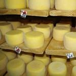 Megnézik, mit hoz ki a sajtból a Varázsfuvola