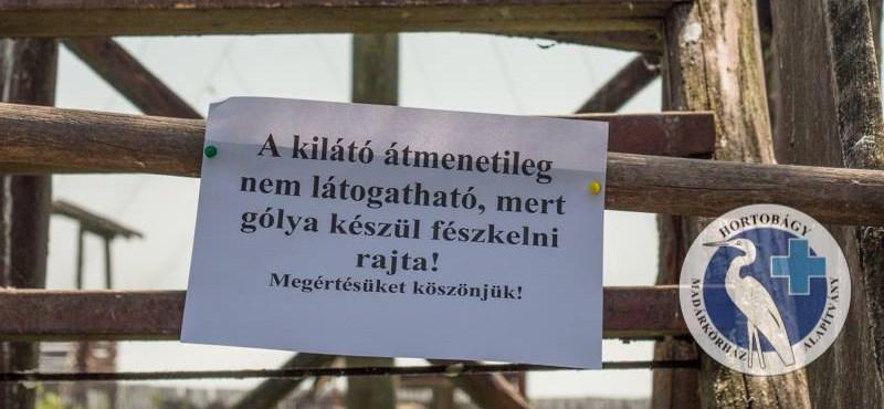MegSzállás: Fészket rakó gólya foglalt el egy kilátót