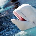 Delfin mentette meg a búvárt a fulladástól