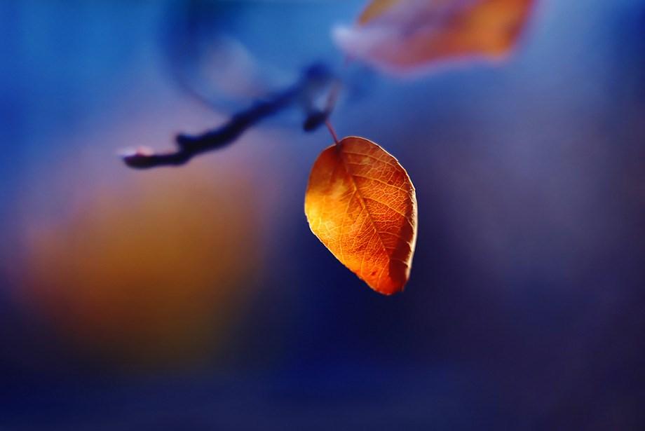 Íme az Önök legjobb képei az őszről - Nagyítás-fotógaléria