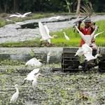 Veszélyesen sugárszennyezett a Fukusima környéki rizs