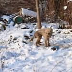 Egy hétig élt volna még a kutya, ha nem tesznek bejelentést az állatvédők