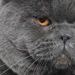 Február 17. a macskák világnapja - Nagyítás-fotógaléria
