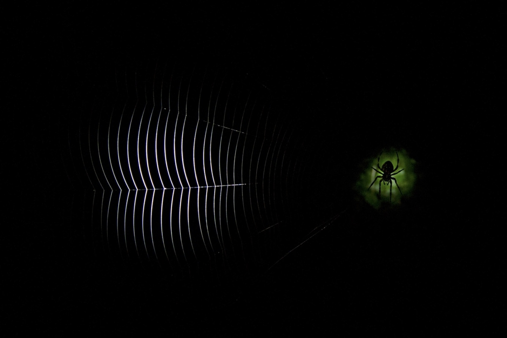 NE HASZNÁLD! - canon év természetfotósa, természetfotó, XIV. Ifjúsági kategória, 1. díj - Pöttyön pók