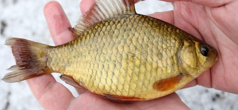Íme az év hala