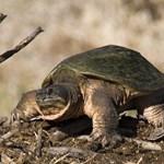 Öt állat, ami a magyarokat is veszélyezteti