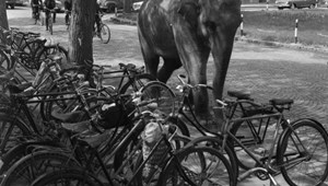 Egyetemi legendák: így került egy elefánt a kollégiumi versenyre