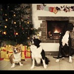 Karácsonyi vakkantások  -  Jingle bells  kutyahangra