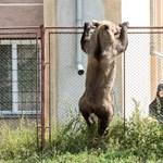 Medveölő