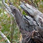 Ez a kép őrjíti meg az internetet: te kiszúrnád a madarakat?