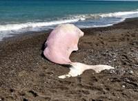 Sokkoló képek: rengeteg műanyagszemetet szedtek ki egy Szicíliánál elpusztult ámbráscetből