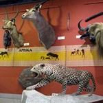 Csomagolhat a Természettudományi Múzeum