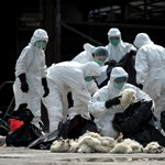 Rájöttek, mi okozta az egyik leghalálosabb járványt