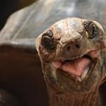 Rájöttek, hogy elképesztő az óriásteknősök hosszú távú memóriája