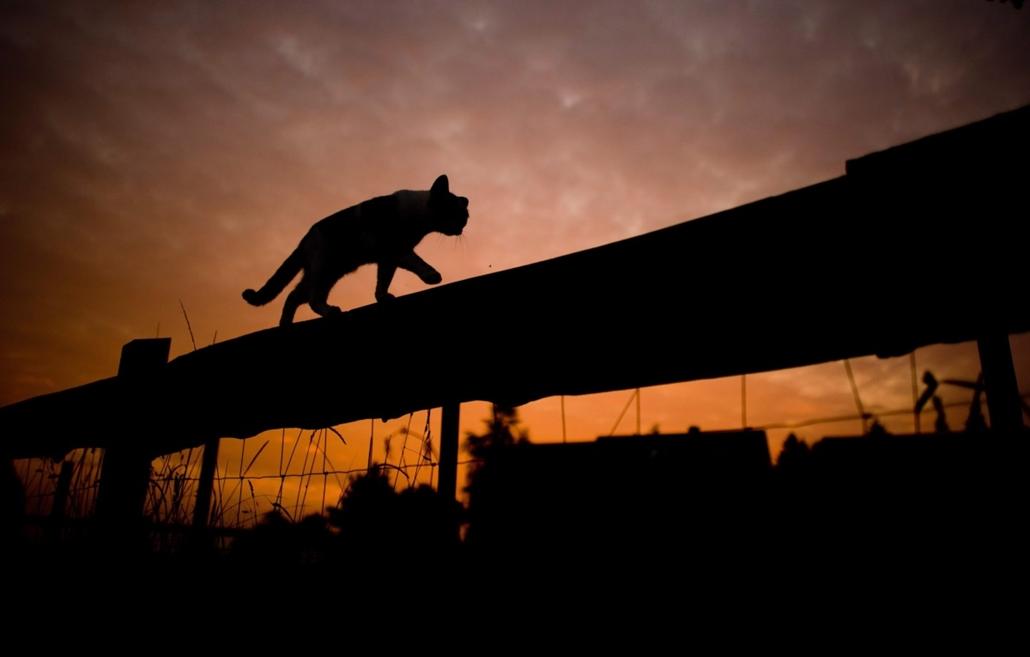 epa.14.09.16. - Sehnde, Németország: hajnali macska a kerítésen - 7képei