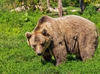 Medve jutott be egy szlovákiai hotelbe