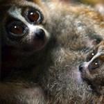 Komoly állatvédelmi programba kezd az állatorvosi egyetem