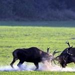 Vadászkamara: Engedjék be a külföldi vadászokat