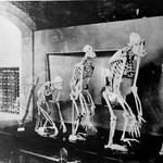 Átírhatják a világ történetét az első embereknél is ősibb szerszámok