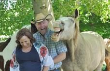 Ló így még nem trollkodott meg terhesfotózást