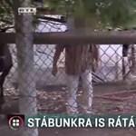 Kerítésléccel támadt az RTL Híradó operatőrére egy mélykúti állatkínzó
