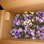 Rászállhatnak-e a NAV-osok az alkalmi virágárusokra?
