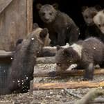 Fotók: élet az orosz medvebocs-rezervátumon