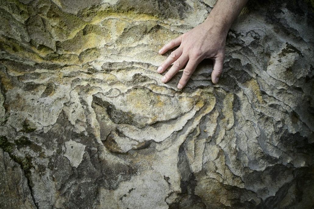 mti. hét képei - A Föld napja - Szemes kő Karancsberény, 2014.04.22. Egy szemes kő felülete Karancsberény közelében 2014. április 21-én. A Novohrad-Nógrád Geopark területén található 25-30 millió évvel ezelőtti sekély tengerben keletkezett homokkövek gyak