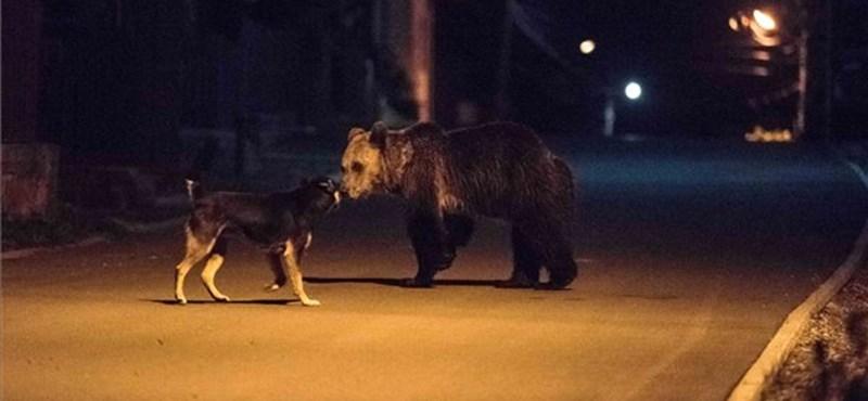Medve harapdálta össze egy férfi lábát Szenterzsébeten
