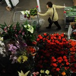 Nőnap Magyarország legnagyobb virágpiacán  - Nagyítás