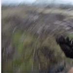 Embert ölt egy medve Oláhkocsárdnál