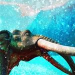 Mamutok gyomortartalma mesél a jégkorszakbeli Szibériáról