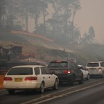Elszenesedett állattetemek fekszenek az út mentén a tűzvész után Ausztráliában