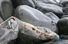 Súlyosan veszélyezteti a mangroveerdőket a folyókból érkező műanyaghulladék