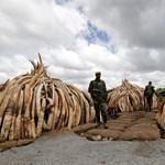 Az elefántok is jól járnak a korrupt kínai hivatalnokok levadászásával
