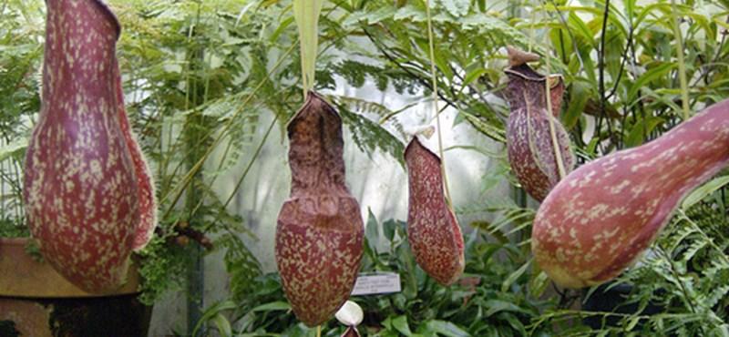 Csodanövények, amelyek köztünk élnek