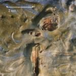 Valódi szöcskét találtak van Gogh festményében