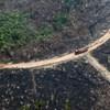 Egy negyed magyarországnyi terület pusztult el tavaly az Amazonas erdőiben