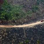 Idén eddig kétszer annyi esőerdő pusztult el Brazíliában, mint tavaly