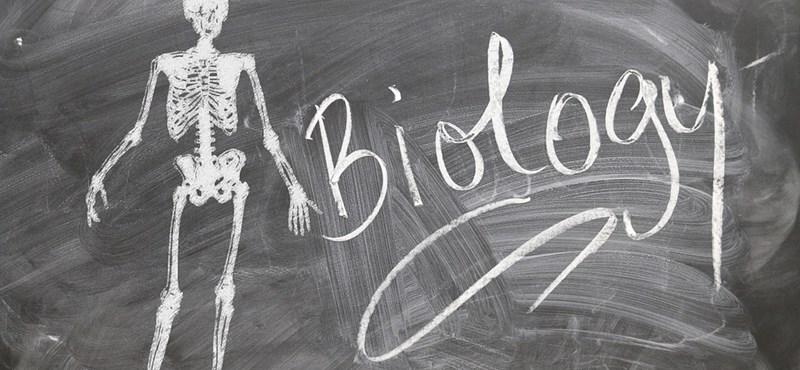 Izgalmas bioszteszt: minden kérdésre tudjátok a választ?
