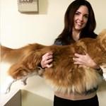 Ismerjék meg Omart, a világ legnagyobb macskáját
