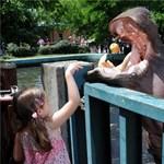 A látogatók etethetik a vízilovat az állatkertben - fotó