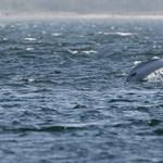 Egészen a kikötőig kijöttek a vadászó delfinek Olaszországban
