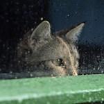 Méreggel átitatott kenyér miatt pusztulhatott el egy macska Miskolcon