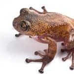 Fotók: Több mint száz furcsa új fajt találtak Ázsiában