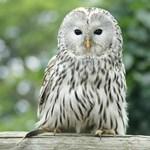 Fotó: Ritkán téved ilyen madár az Alföldre