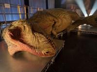Kutatók szerint border collie méretűek voltak a T-rex-bébik