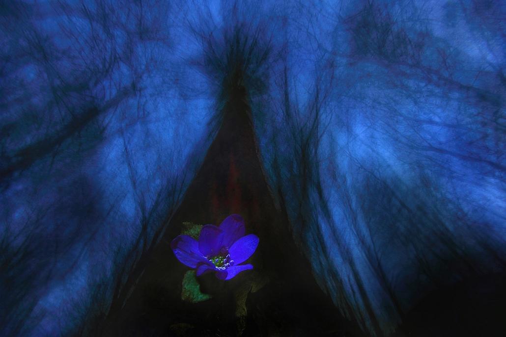 NE_! - VII. Növények és gombák - 1. díj - Az erdő virága - Az Év Természetfotója 2014, nagyítás