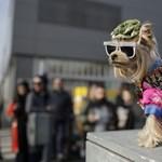 Túljártak a kutyákat a metróból kitiltó hatóságok eszén a gazdik