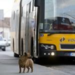 Emberséges Volánbusz-sofőr sztorija terjed a Facebookon